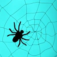 Spider Web?