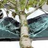 Falling Tree Limbs | Windshield Repair