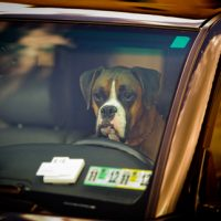 Safety Tips for Kids, Pets | Don's Mobile Glass
